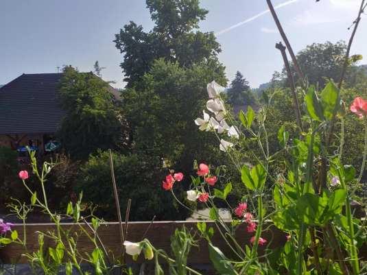 terrasse fleurs 3